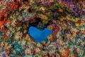 heartshaped hole coral cave ceiling Bonaire Island. heart-shaped heart shaped Island