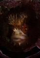 Playing peekaboo Mosshead Warbonet Chirolophis nugator inside discarded bottle peek-a-boo peek boo