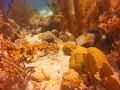 This was taken close Tug Boat dive spot Curarcoa. Curarcoa