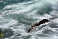 Holding firm despite surge passing hurricane Joae. Sept 17 Joae