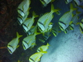 Puertos Morelos Mexico diving. low season so many Currents be quick time pay attention your buddy. diving buddy