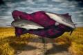 Silk Road part my Underwater Surrealism body work. This image referring name these animals Silky Shark work