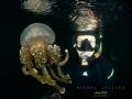 Having thousand non stinging Jellyfish was amazing feeling