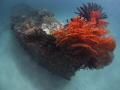 Artificial reef Pemuteran Biorock project