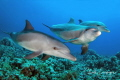 Dolphins Umm Gamar