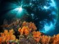 Reef meets Jungle Passage Raja Ampat