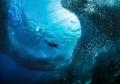 Free diving meddel sardines.Pangsama reef Moal Boal.Nikon D800E 16mm. No strobo sardines. sardines Boal. Boal 16mm