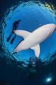 Shark dancer
