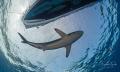 Shark Boat Gardens Queen Cuba