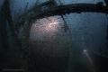 Wreck Mohammed Hasabella Glasslfish close stern. stern