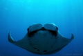 Amazing Manta encounter Cao Island Pacific side Costa Rica. This curious beauty hovered around amost hour. Rica hour
