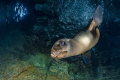 playful sea lion small cavern Mexico
