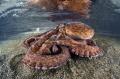 Solar tentacles