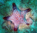 vibrant starfish off Pacific Coast Costa Rica Highlighted spot light. light