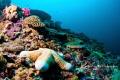 Taken drift dive Nusa Lembongan
