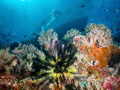 view shallows beautiful Wakatoobi reef