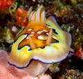 Last dive Palau