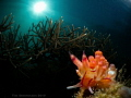 Nudibranch reef