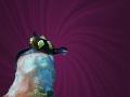 Colpodaspis thompsoni size 3mm