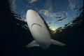 silky sharknikon D800ETOKINA lens 1017mm 15mm two ikelite subtrobe DS125 aquatica housing 10-17mm 10 17mm