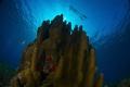 meter high pilar coral Gardens queen cuba nikon D800Etokina lens 1017mm 15mmtwo ikelite subtrobe Ds125 aquatica housing 10-17mm 10 17mm