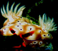 PEEPING NUDIA naughty one Dauin... NUDI/A NUDI Dauin