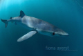 small blue shark sniffing around my camera. yum camera