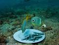 Fish Chips Nikon d80 Jason deCaires Taylor /d80