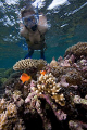 hope this works CFWA if please move correct category. my beautiful wife snorkeling pair Clown fish Qamea reef Fiji. trip was first experience taking pictures while snorkeling. category Fiji