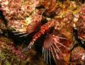 Taken drift dive Musandam got bit close liking this little fellow