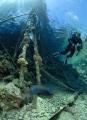 diver morray eel taken big brother. brother
