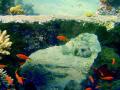Pufferfish under coral bridge