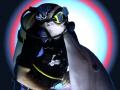 Forbidden Love Interspecies Style Curacao Dolphin Academy Canon Digital rebel 1855 zoom Ikelite 125 Nikonos SB 105 slave 18-55 18 55