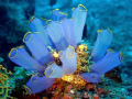 Flowers Deep Sea Beautiful Soft Corlas