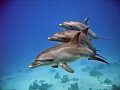 Dolphins adults baby count tails... tails...) tails) tails