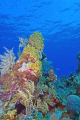 Reef shot Bobs wall North shore Grand Cayman. Warm clear waters no current killer visibility. Nikon 1224 D200 LM housing. Cayman visibility 12-24 12 24 housing