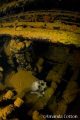 Human Skull. remains lay deep inside Heian Maru wreck Truk Lagoon Chuuk. Amanda Cotton Skull (Chuuk). (Chuuk)