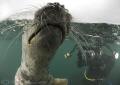 Grey seal. Farne islands. D200 10.5mm. seal islands 105mm 10 5mm