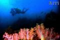 Underwater garden Yeliou north coast Taiwan