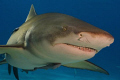 Do you want danceLemon shark tiger beach was smiling me