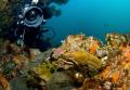 Eel Study. Two morays pose my buddy Poor Knights Islands New Zealand. Study Zealand