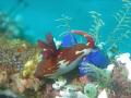 Taken Puerto Galera Philippines