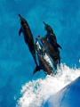 Bow riders ride free......Spotties hitching free warm clear blue waters bahamas free......
