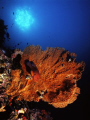 Underwater Similan