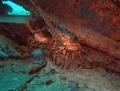 Lobsters Crash Boat Pier Aguadilla Puerto Rico