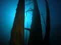 Bosque sumergido Lago Traful Patagonia Argentina