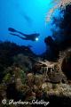 Lobster Spotlight