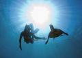 snorkelling Madagascar