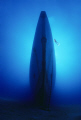 Roaring SilenceDiver explores wreck sunken fregate. fregate