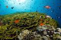 Balancing light. Jackson reef Strait Tiran Red Sea. Canon Rebel XSi Tokina 1017mm fisheye Ikelite housing two strobes DS125. light Sea 10-17mm 10 17mm DS-125. DS-125 DS 125.